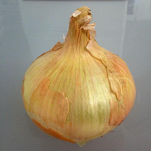 cebolla de villafranca
