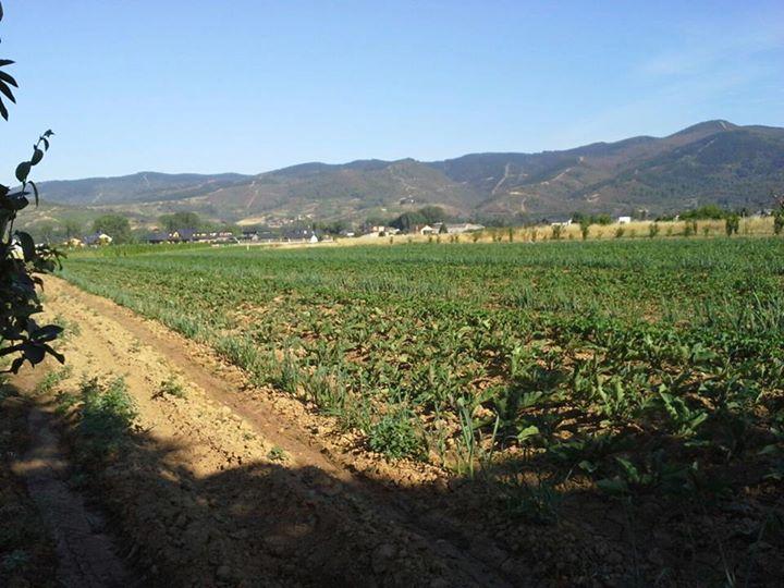 Huerta de Arroyo