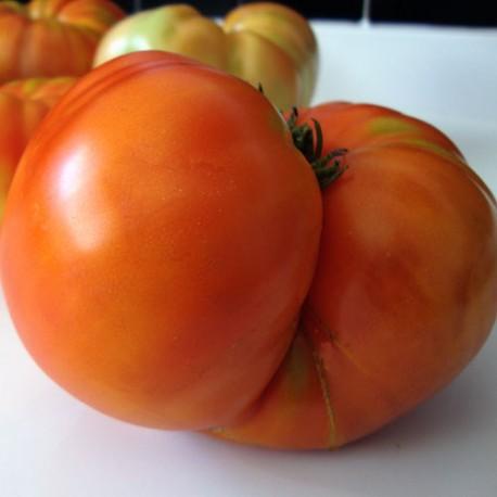 4 Kg de Tomate ecológico. Fin de temporada