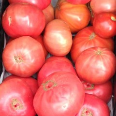 Tomate rosa del Bierzo 3 Kg. FIN DE TEMPORADA