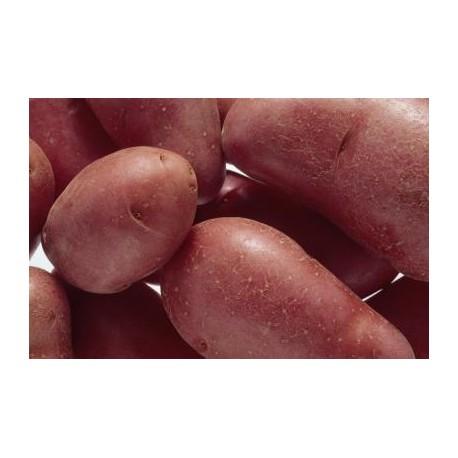 Patata roja del Bierzo. 5Kg