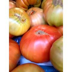 4 Kg de Tomate